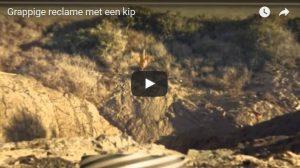 Filmpje: Maandag 8 mei: Kip zoekt vrijheid