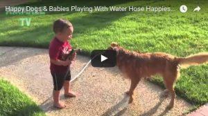 Filmpje Dinsdag 9 mei: Honden, baby's, water