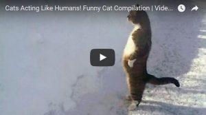 Filmpje Woensdag 10 mei: Menselijke kattentrekjes
