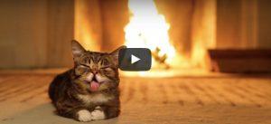 Filmpje Maandag 29 mei: Kat bij haardvuur