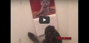 Maandag 17 juli Filmpje: Hond blaft naar kalender
