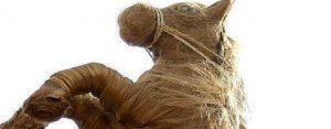 Zaterdag 14 oktober Plaatje: Paardenkapsel