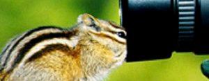 Dinsdag 7 november Plaatje: Dierenfotografie