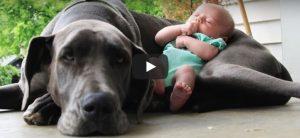 Zondag 11 maart Filmpje: Baby's en honden