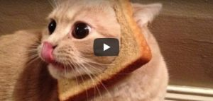 Dinsdag 20 maart Filmpje: Broodkat