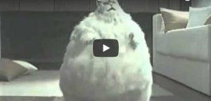 Zaterdag 7 april Filmpje: Dikke dansende kat