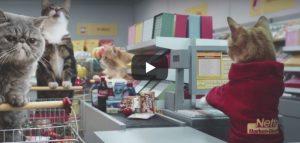 Zondag 6 mei Filmpje: Katten in winkel