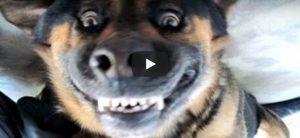 Dinsdag 8 mei Filmpje: Blaffende honden