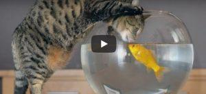 Zondag 20 mei Filmpje: Katten en vissen