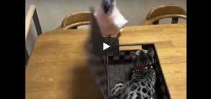 Vrijdag 8 juni Filmpje: Vogel, kat, doos