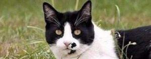 Vrijdag 8 juni Plaatje: Kat met sprieten