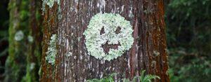 Dinsdag 16 oktober Plaatje: Vlek op boom
