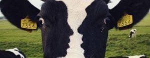 Zaterdag 15 december Plaatje: Drie gezichten