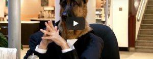 Maandag 11 maart Filmpje: Hondenbaan