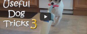 Zondag 14 april Filmpje: Handige hond