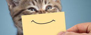 Vrijdag 26 juli Plaatje: Lachende kat