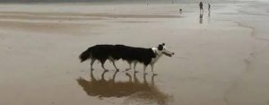 Zaterdag 23 november Plaatje: Lange hond?