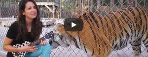 Donderdag 28 november Filmpje: Dieren reageren op muziek