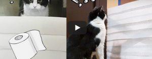 Zaterdag 21 maart Filmpje: Kat vs toiletpapier