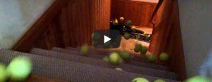 Donderdag 2 april Filmpje: Hond pak bal, bal, bal, bal…