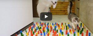 Zondag 26 april Filmpje: Gecontroleerde kat, lompe hond