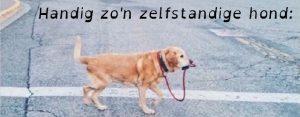 Donderdag 23 juli Plaatje: Zelfstandige hond