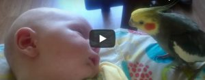 Zaterdag 5 september Filmpje: Vogel zingt slaapliedje